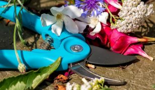 Best Pruning Shears for Arthritis