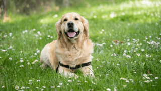 Essentials: Things To Buy For A New Dog