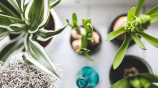 How to keep gnats out of house plants: easy tips